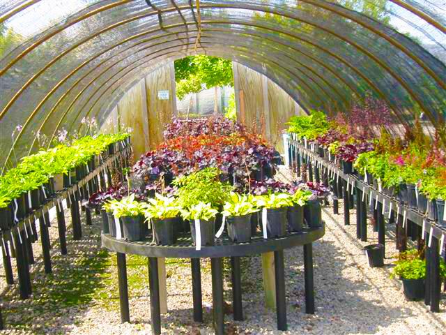 Garden Center Nursery Lang Landscape Llc