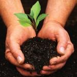 tree-planting